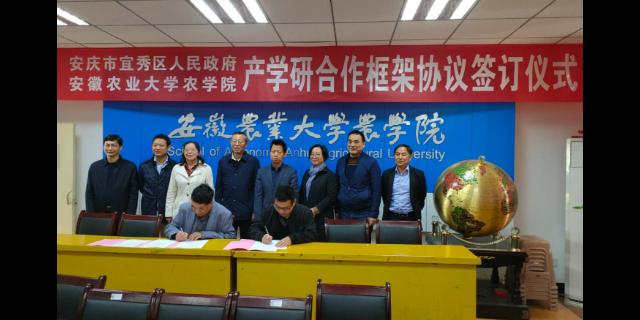 芜湖血糯米营养价值 欢迎来电「宇顺高科种业供应」