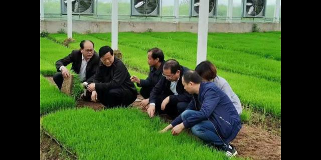 怀宁便宜的畦田珍米价格是多少 推荐咨询「宇顺高科种业供应」
