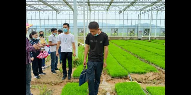 芜湖畦田珍米包装怎么样 欢迎来电「宇顺高科种业供应」