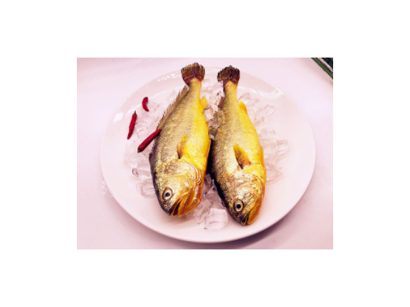 浙江台州铜合金铜围网深海大黄鱼多少钱一斤 推荐咨询 台州广源渔业供应
