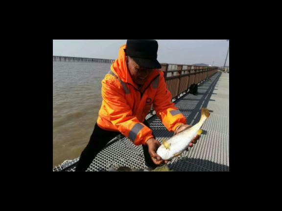 台州海极尊冻鲜大黄鱼供货商 欢迎来电「台州广源渔业供应」