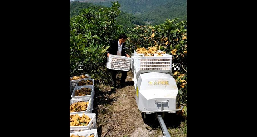 嘉定区果园运输机哪家好 欢迎咨询 台州合祥机械供应