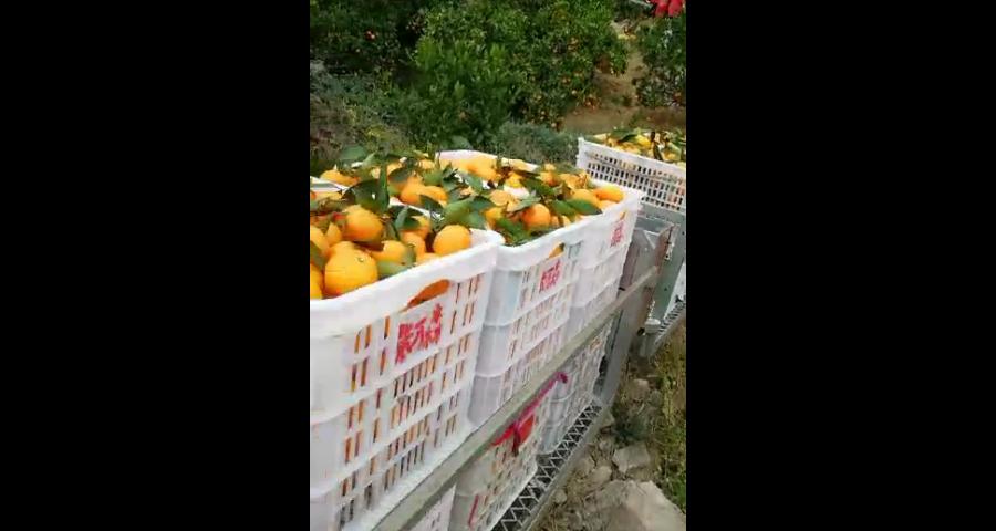 萍乡果园运输机品牌 创新服务 台州合祥机械供应