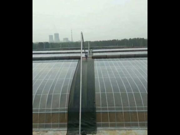 温室大棚现状 服务至上「山东瑞庆机电设备供应」