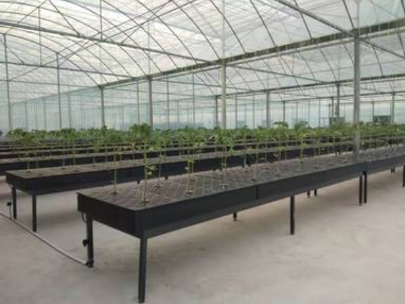陽光板溫室施工 有口皆碑「壽光澤惠農業科技供應」