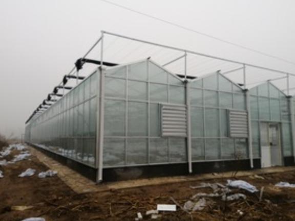 内蒙古文洛式玻璃温室,玻璃温室