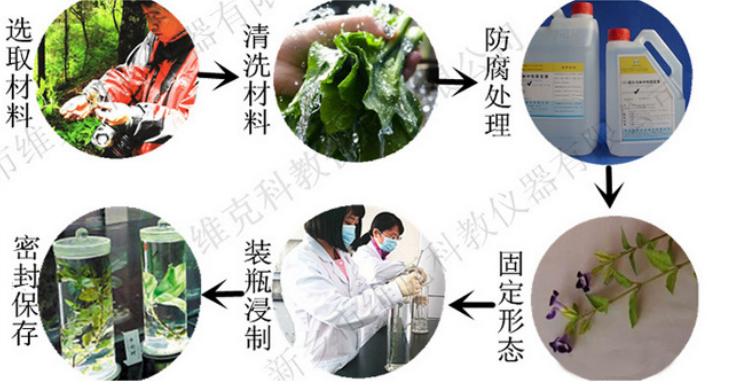 鄭州浸制標本工廠,浸制標本