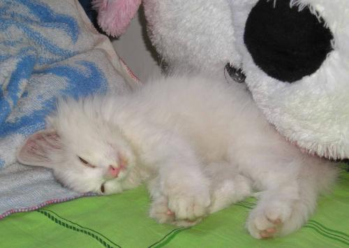 江岸区一般的猫瘟欢迎来电,猫瘟