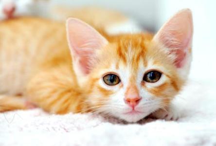 黄陂区有实力的猫瘟收费标准,猫瘟
