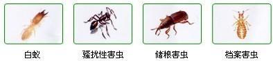 黄陂螨虫防治价格,防治