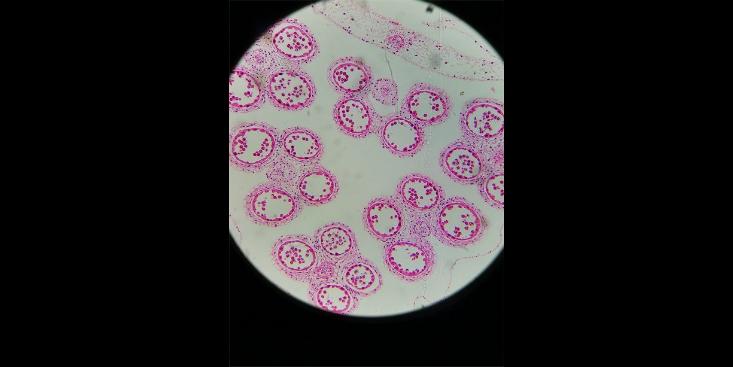 組胚病理切片按需定制