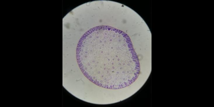河南优质组胚病理切片「维克科教供」