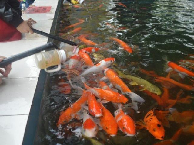 甘肃专业安装喂奶鱼 欢迎来电「广州瓦力游乐设备供应」
