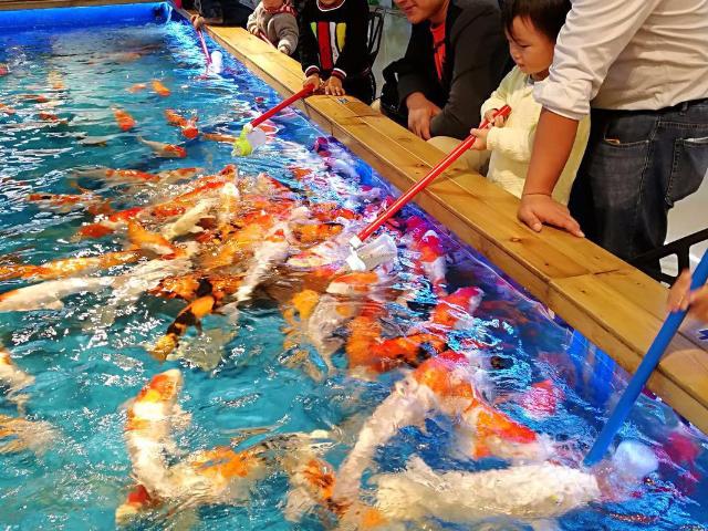 甘肃喂奶鱼厂家直销 诚信为本「广州瓦力游乐设备供应」