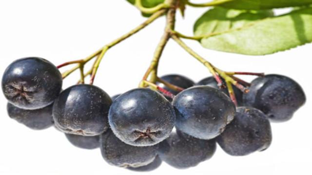 杭州德国进口不老莓酵素多少钱 欢迎咨询「湖南沃滋康生物科技供应」