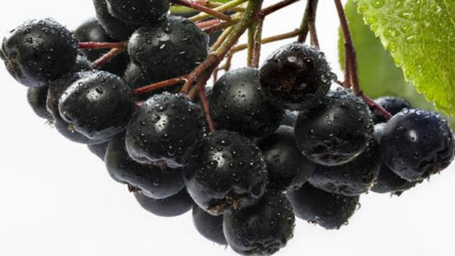 上海怎么代理德国进口不老莓 欢迎咨询 湖南沃滋康生物科技供应