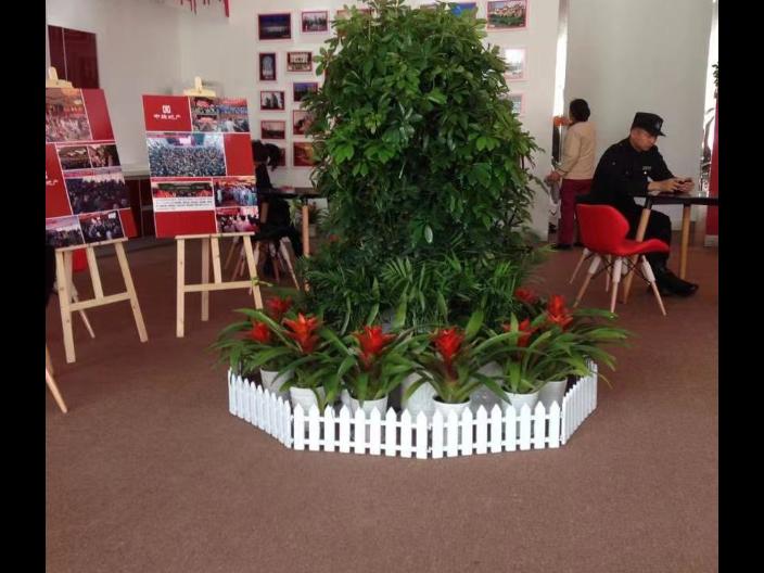 无锡惠山区小型花卉租赁多少钱