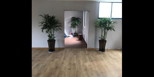 新款办公室绿化诚信经营 来电咨询「无锡海天梦园艺供应」