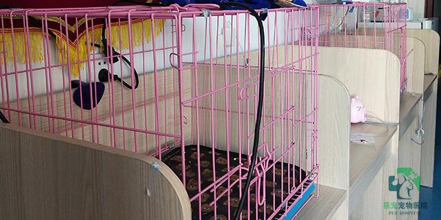 明阳路哪家宠物医院剪毛便宜,宠物医院