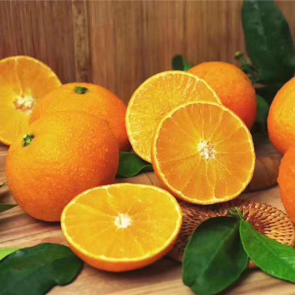 嘉興本地柑橘 有口皆碑「象山文祥家庭農場供應」