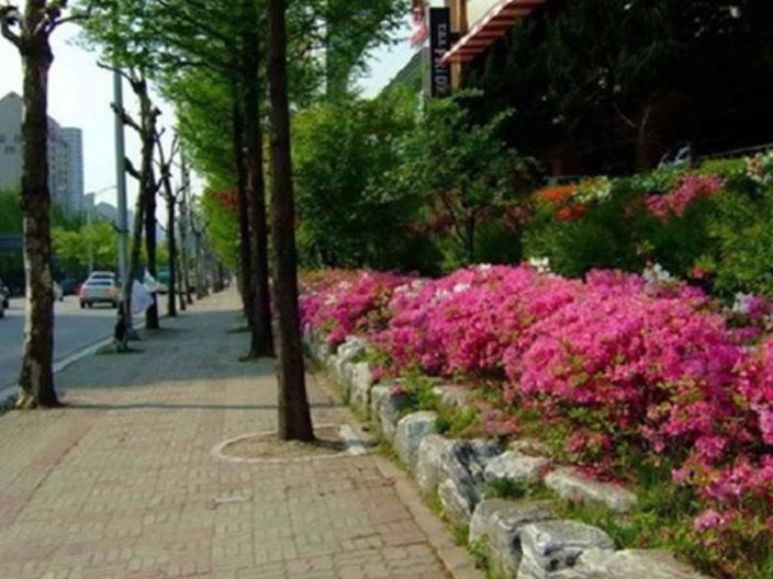 苏州服务园林绿化工程施工报价