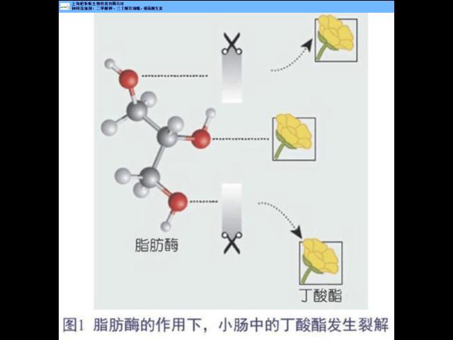 山东丁酸甘油酯品牌 值得信赖「 上海旭牧联供应」