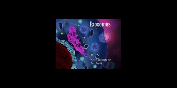 上海細胞上清外泌體透射電鏡檢測 歡迎來電「研載生物科技供應」