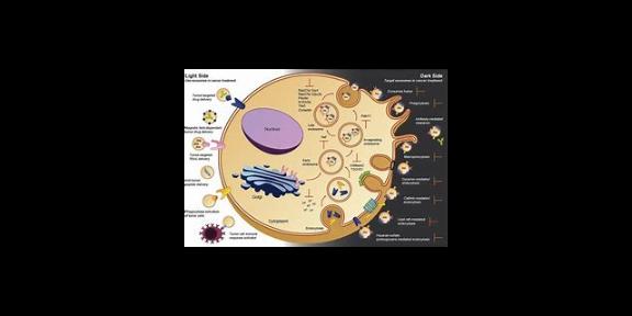 山東血漿外泌體染色PKH67/PKH26 服務為先「研載生物科技供應」