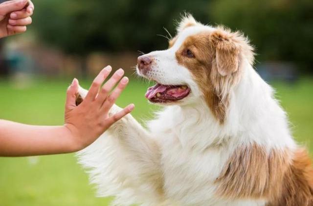 承德宠物训练 有口皆碑「优耐颐康宠物供应」