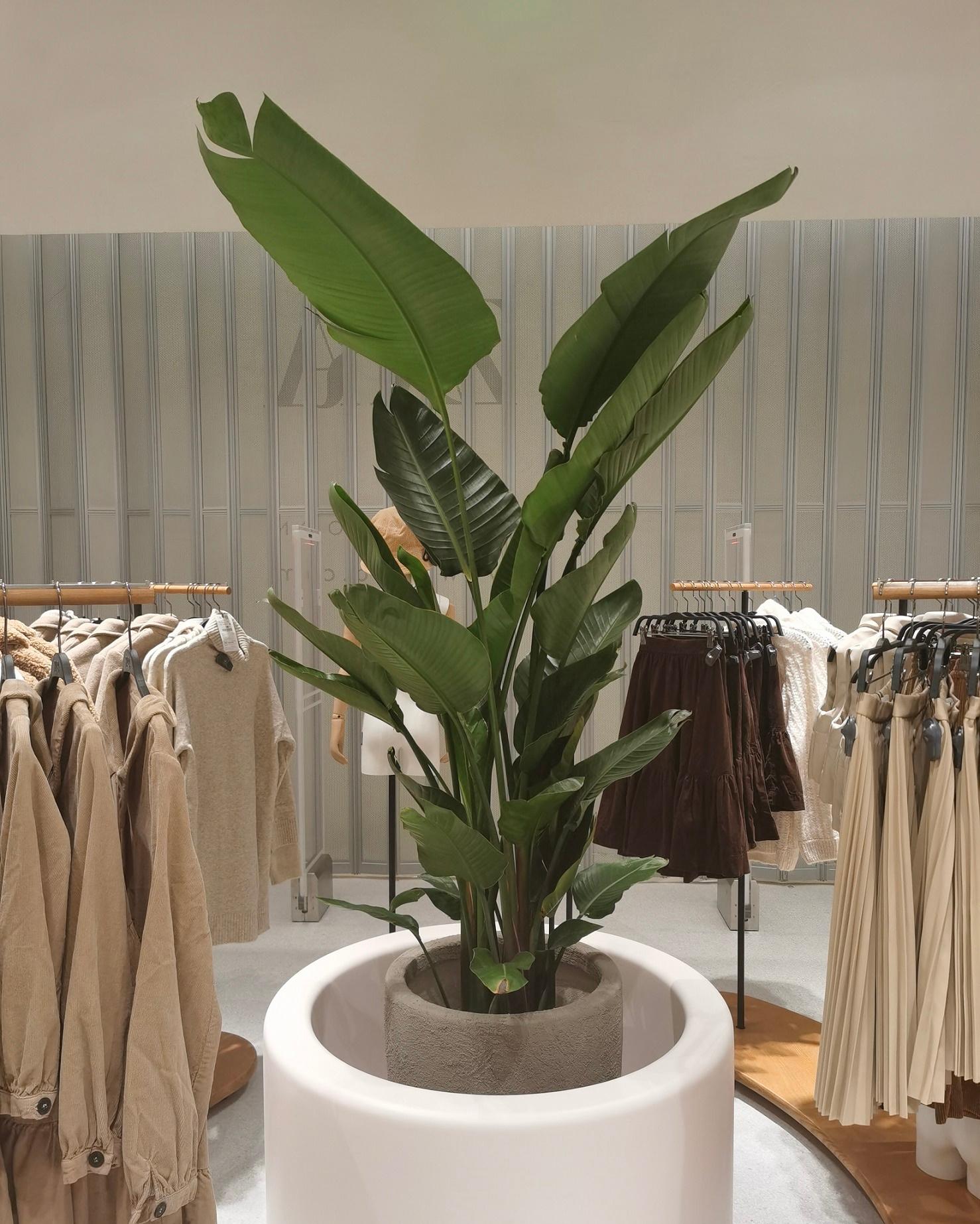 浦東企業室內綠化怎么收費
