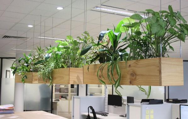 企業室內綠化怎么收費