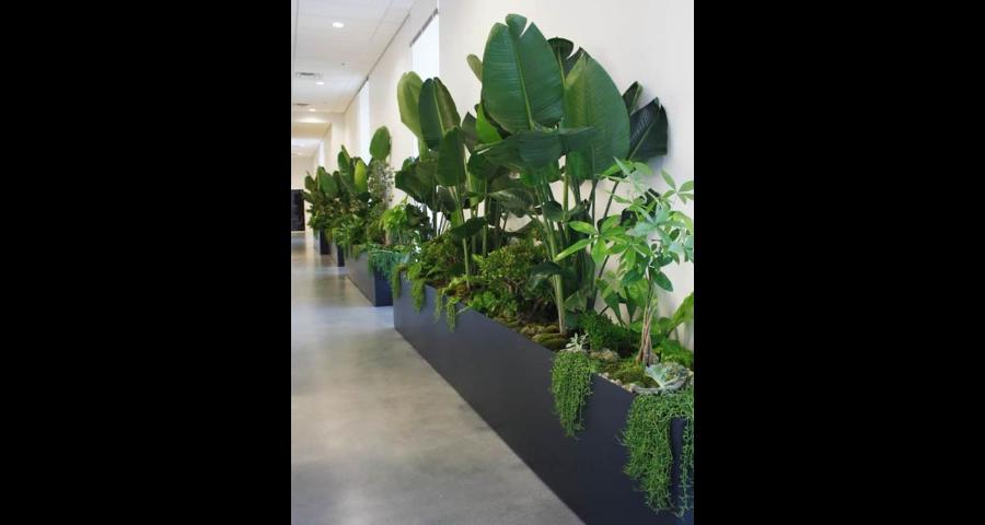 江蘇企業室內綠化品種