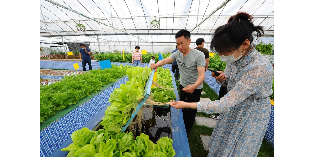 济南深水浮筏鱼菜共生场地 服务至上 江苏渔泽清供应