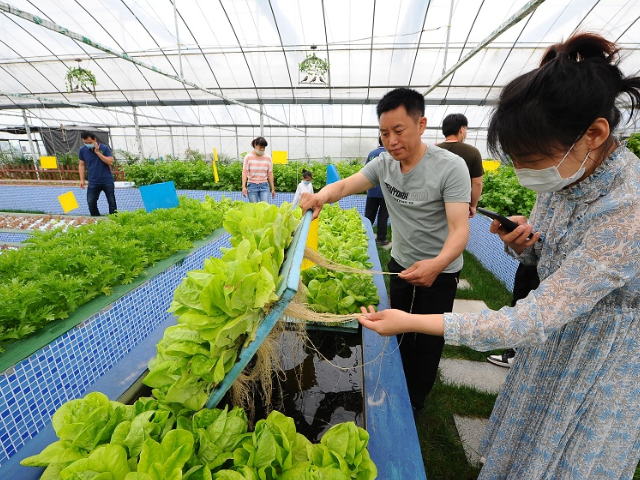 广州休闲养生生态农场技术 和谐共赢 江苏渔泽清供应