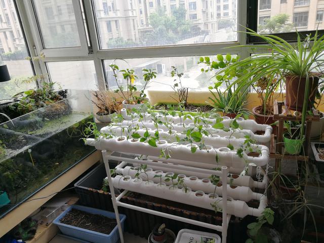 芜湖绿化生态农场设计 服务至上 江苏渔泽清供应