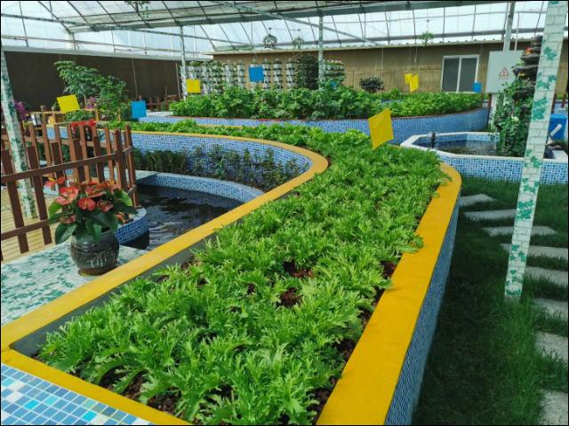 石家庄种植农业园设计 创新服务 江苏渔泽清供应