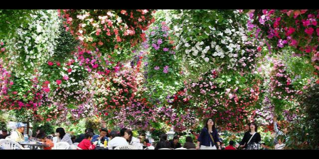 苏州婚礼鲜花餐厅价钱 铸造辉煌 江苏渔泽清供应