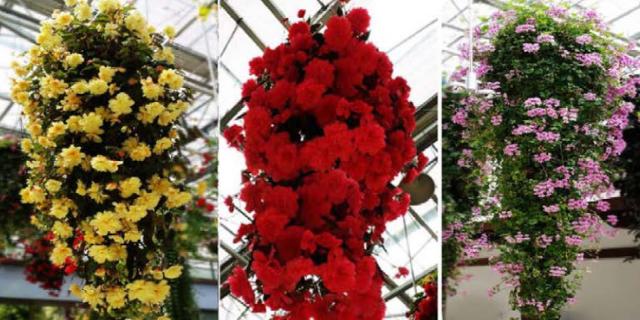 合肥垂吊鲜花鲜花餐厅价格 信息推荐 江苏渔泽清供应