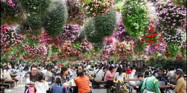 珠海种植鲜花餐厅价钱 铸造辉煌 江苏渔泽清供应