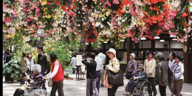 垂吊鲜花鲜花餐厅哪家好 贴心服务 江苏渔泽清供应