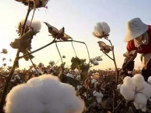 天津有机棉认证 值得信赖 中恒大耀纺织供应