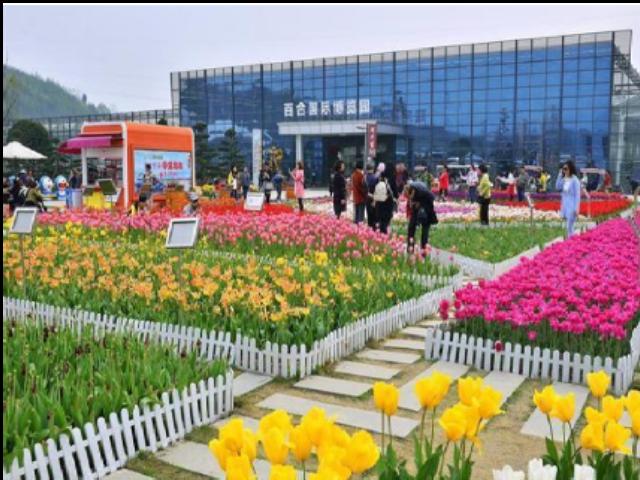 青海大型温室大棚补贴 值得信赖「成都首诺农业供应」