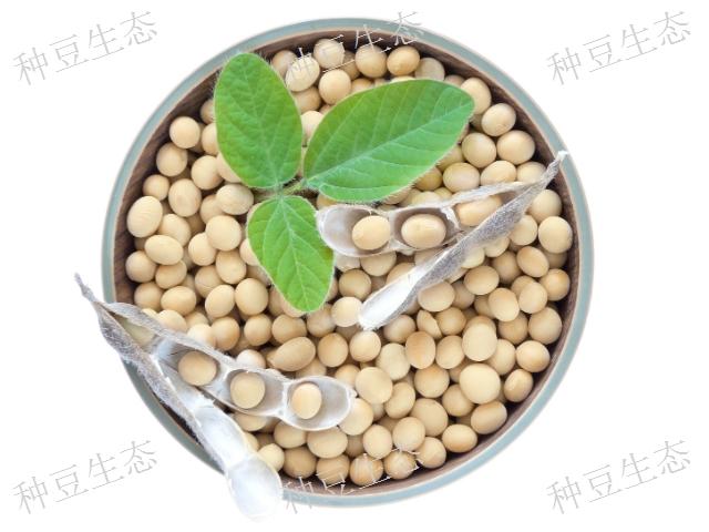 徐州有机金胚芽植物奶 服务至上 无锡市金红农业科技供应