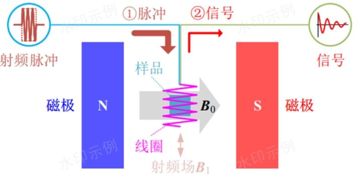 河北体成分核磁共振氢谱