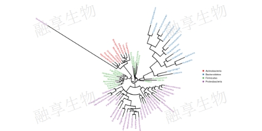 湖南相對定量qPCR公司哪家好 服務為先「上海融享生物科技供應」