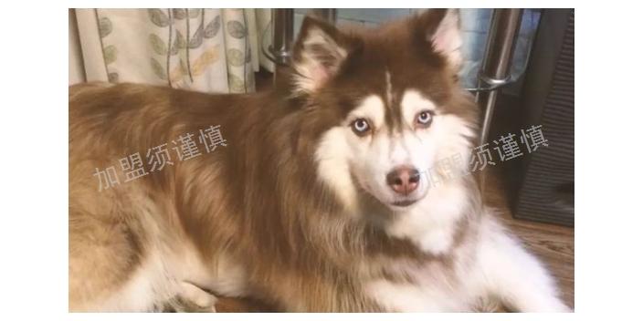 盐城宠物殡葬加盟需要投资多少 上海宠淘宠物供应