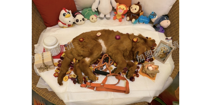 遼寧寵物殯葬加盟需要投資多少「上海寵淘寵物供應」