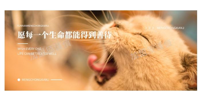 晋城宠物殡葬加盟总部 上海宠淘宠物供应