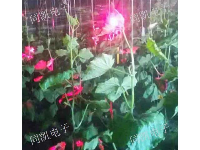 青海激光补光灯生产 贴心服务 西安同凯电子科技供应
