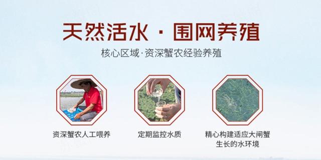 苏州高端大闸蟹 服务至上「上海苏蟹阁实业供应」